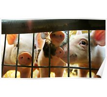 Perfectly Playful Piggies Poster