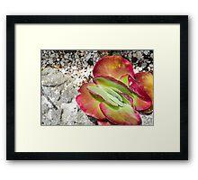 Sliced Succulent Framed Print