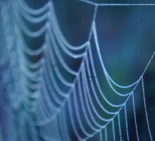 Dew Covered Spider Web Macro Sticker