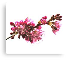 Study in Pink and White II Canvas Print