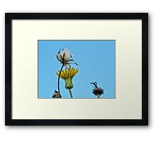 NS Seeds In Blue II ONFX© Framed Print