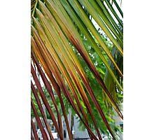 Calm Palm Photographic Print