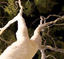 Ghost tree at Uluru Sticker