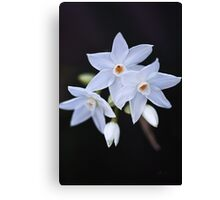 Paperwhite Winter Flowers Canvas Print