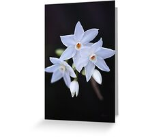 Paperwhite Winter Flowers Greeting Card
