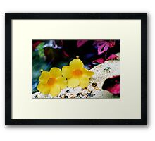 Pair of yellow bells Framed Print