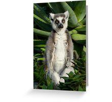 Meditating Ring-tailed Lemur Greeting Card