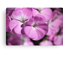 Wonderful Uncommon Geranium Canvas Print