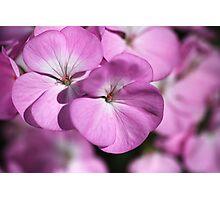 Wonderful Uncommon Geranium Photographic Print