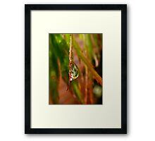 Weeping Maple Framed Print