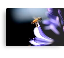 Pollen Hunter Metal Print