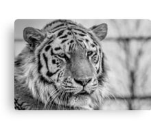 Amur Tiger (B&W 1) Canvas Print