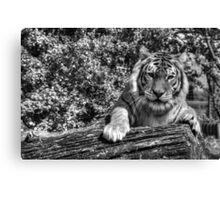 Hybrid Tiger (B&W 1) Canvas Print