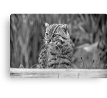 Fishing Cat (B&W 1) Canvas Print