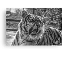 Hybrid Tiger (B&W 3) Canvas Print