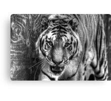 Hybrid Tiger (B&W 4) Canvas Print