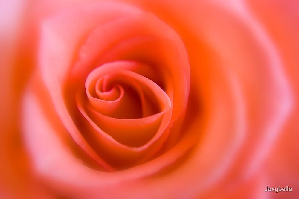 Pink Rose 2 by Jaxybelle