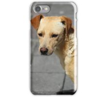 Brown Stray Puppy on the Street iPhone Case/Skin