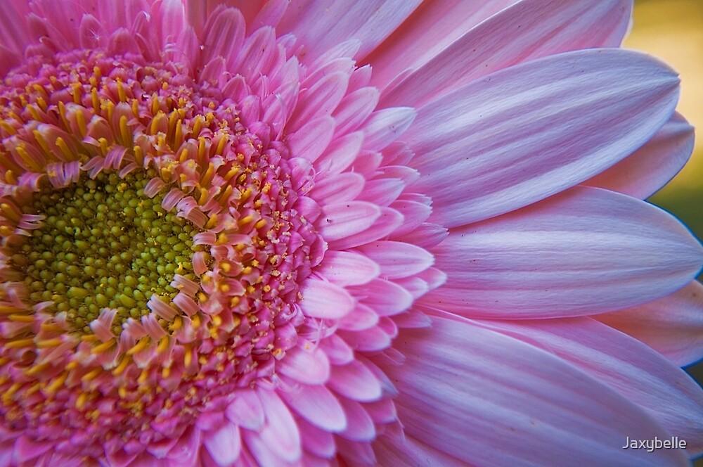 Pink Gerbera by Jaxybelle