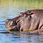 Mr Hippo! by Lyn Darlington