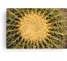Spines on a Cactus Canvas Print