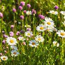 Summer Garden by Veikko  Suikkanen