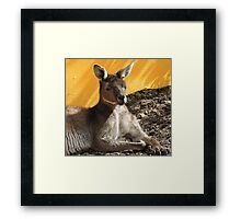 Happy Resting Kanga Framed Print