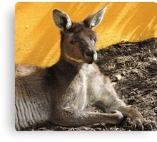 Happy Resting Kanga Canvas Print