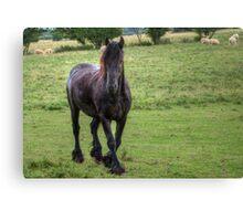 Friesian Horse Canvas Print