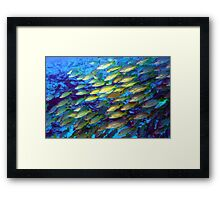 Coral and a school of fish Framed Print