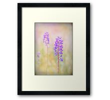 bluebonnet Framed Print