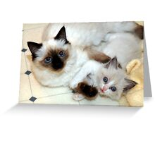 Ragdoll Mom and baby playing Greeting Card