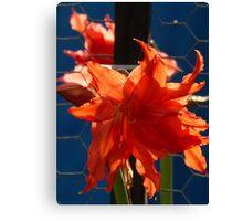 flower and colors - flor y colores Canvas Print