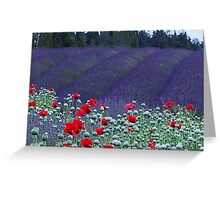 Poppies in the Lavender fields Greeting Card