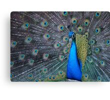Mister Magnificent Canvas Print