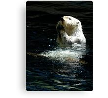 Sea Otter shaking up his dinner Canvas Print
