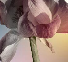 Rainbow Lotus Flower Sticker