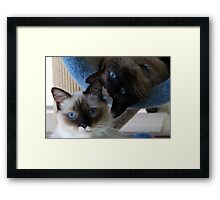 Bella and Murphy Framed Print