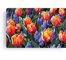 Princess Irene Tulips ~ Skagit Valley Canvas Print