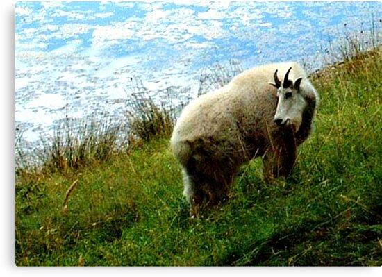 Mountain Goat by Marjorie Wallace