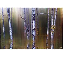 Aspen Reflections Photographic Print