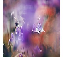Through the Silky Veils Photographic Print