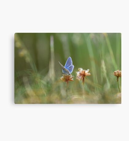 """"""" Painterly Wings """" Canvas Print"""