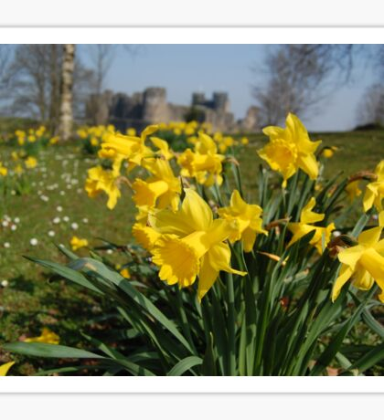 Daffodils in Springtime Sticker