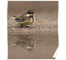 Great Tit Chick Reflection Poster