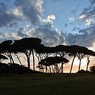 The Baratti Pine Trees by Jo-PinX