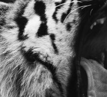 Tiger black and white Sticker