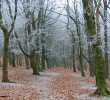 A Wintry Wenallt Woods Sticker