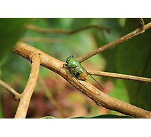 Green Insect on a Tree Branch Photographic Print