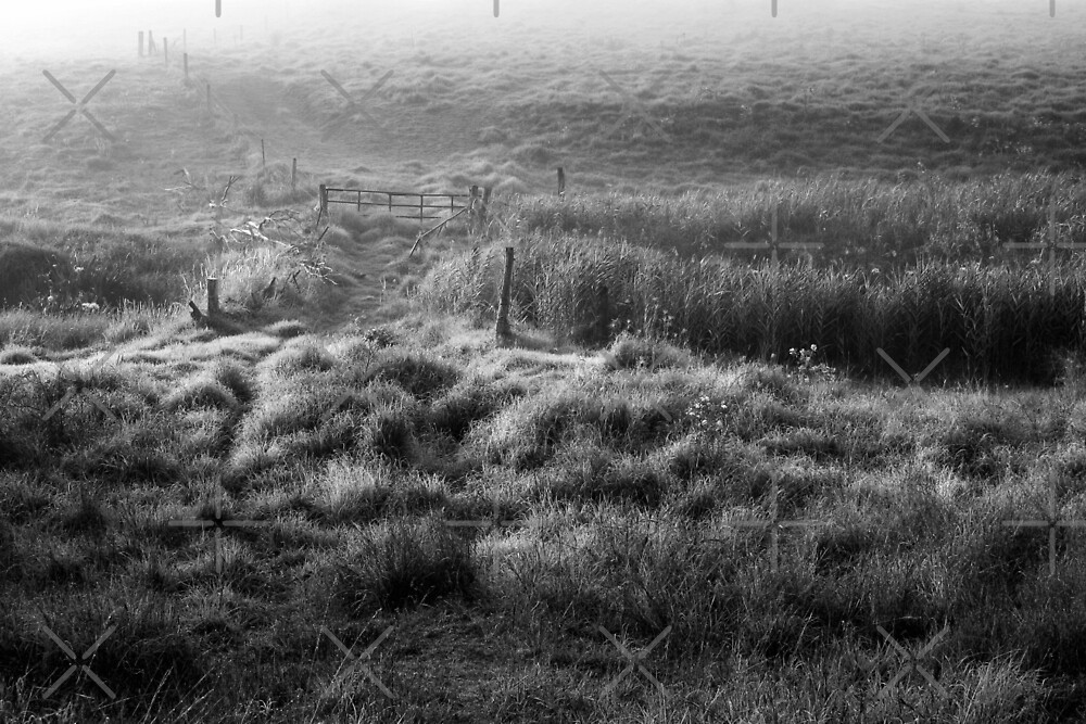 The farm gate by Mel Brackstone